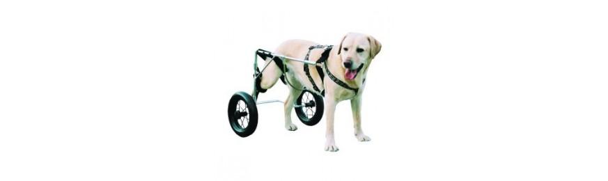 Chariot aide à la marche