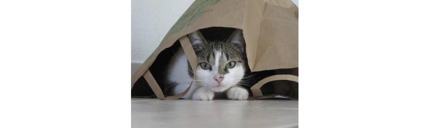 Chat d'intérieur, chat stérilisé